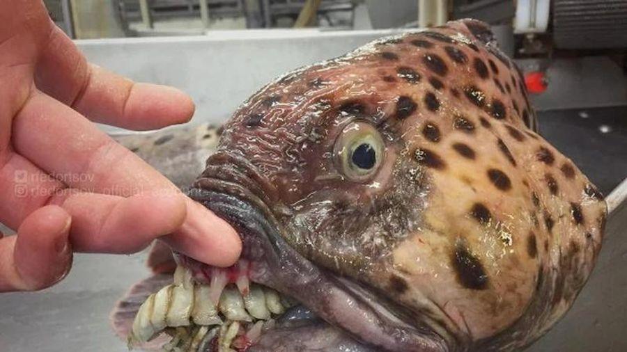 'Bắt gọn' loạt thủy quái biển sâu kinh dị ai xem cũng rùng mình