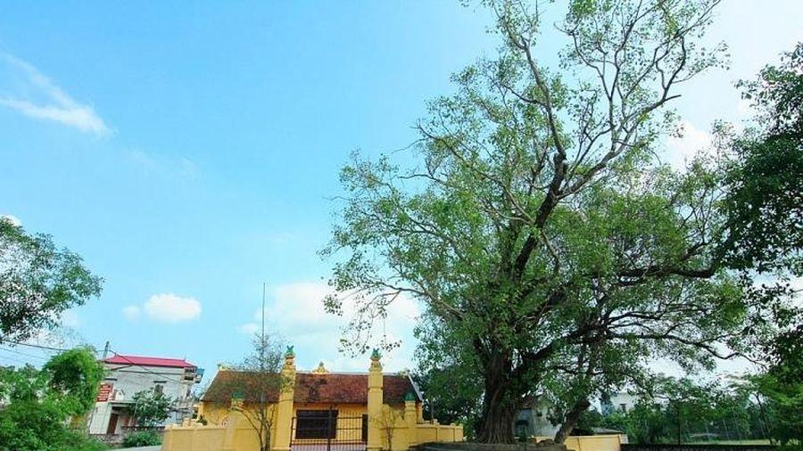Hà Nội: Ghé thăm ngôi làng cổ có tuổi đời 500 tuổi