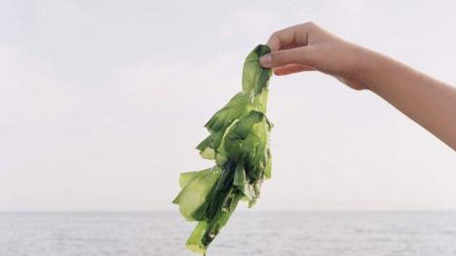 Lợi ích tuyệt vời khi sử dụng rong biển trong chế độ ăn uống hàng ngày