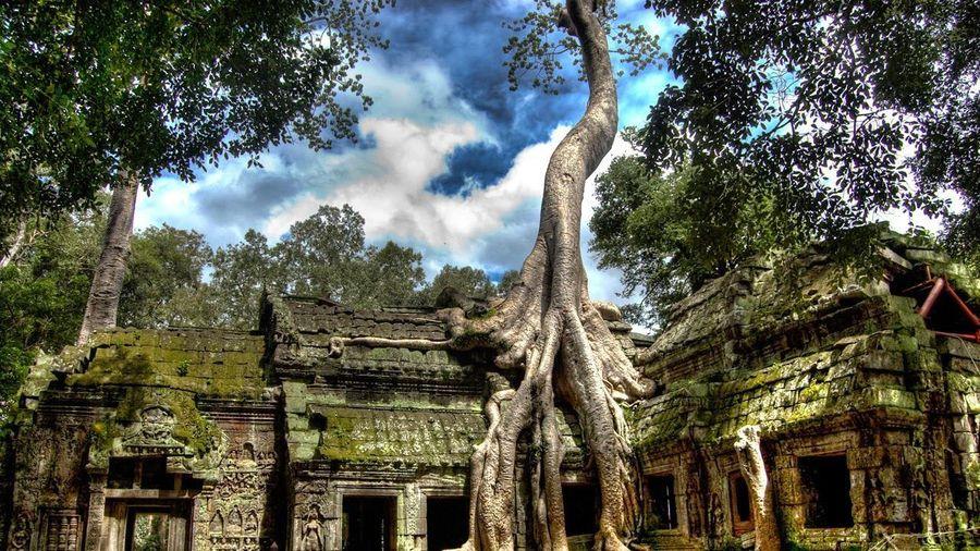 Ngôi đền bị cây nuốt trọn ở Campuchia