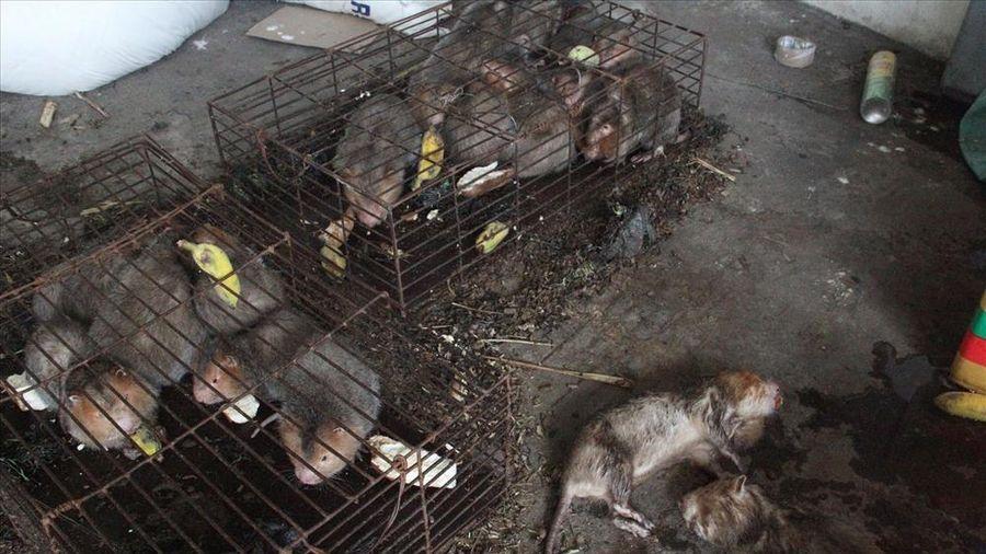 Quảng Trị: Nhiều động vật hoang dã bị tịch thu, chết trong kho Hải quan