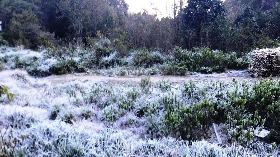 Tuyết, băng giá phủ trắng núi đồi miền núi Nghệ An