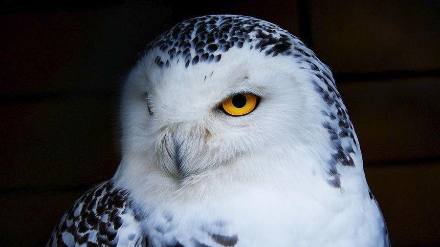 10 loài chim nguy hiểm nhất thế giới