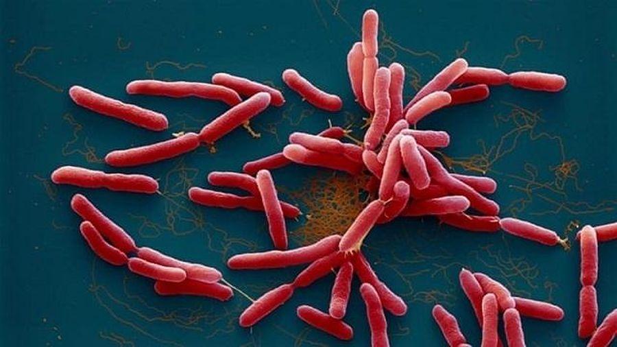 Vụ hai trẻ tử vong vì Whitmore: Phát hiện một mẫu đất chứa vi khuẩn