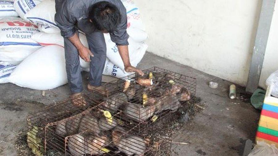 Quảng Trị: Vướng thẩm quyền xử lý, hàng chục thú rừng chết dần trong kho hải quan