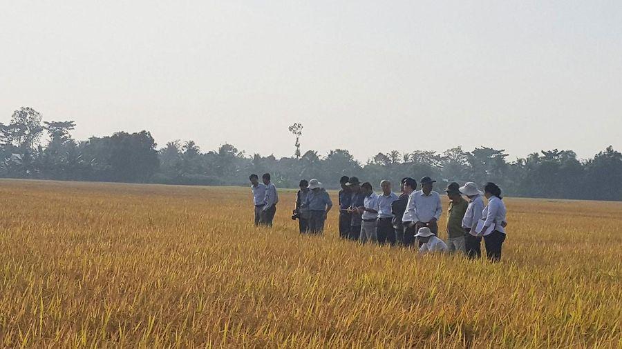 Giảm phát thải khí nhà kính trong canh tác lúa
