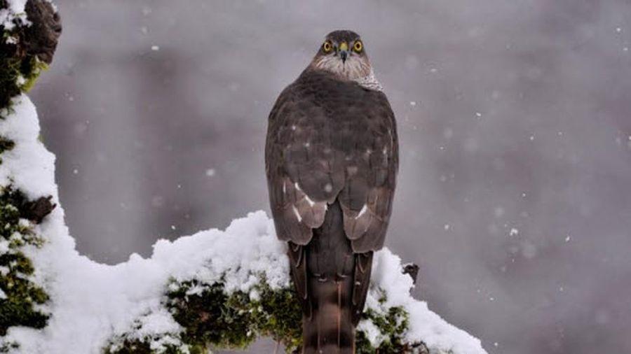 Ảnh động vật: Chim đậu cây phủ đầy tuyết trắng, cá mập 'hiền lành'...