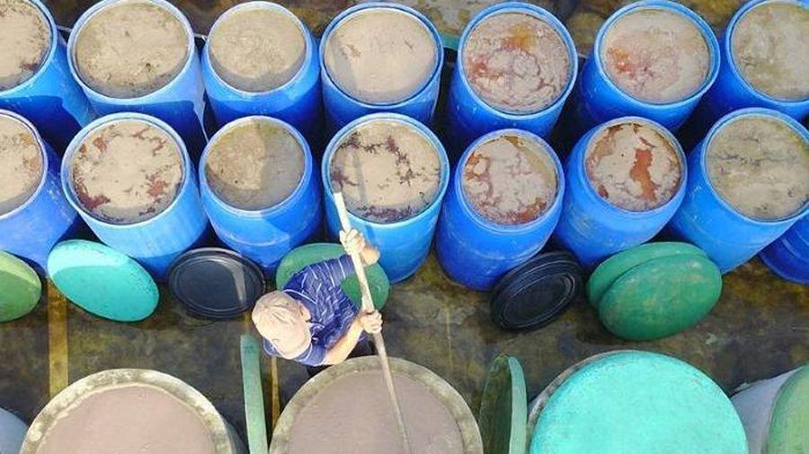 Thử một lần 'săn' ruốc biển đặc sản Cửa Lò cùng ngư dân Nghệ An
