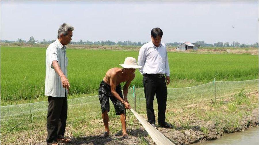 'Con tôm ôm cây lúa' mối lương duyên giúp nông dân thoát nghèo