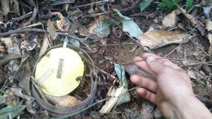 Đi bẫy thú trong rừng, người đàn ông bị bắn thủng bụng