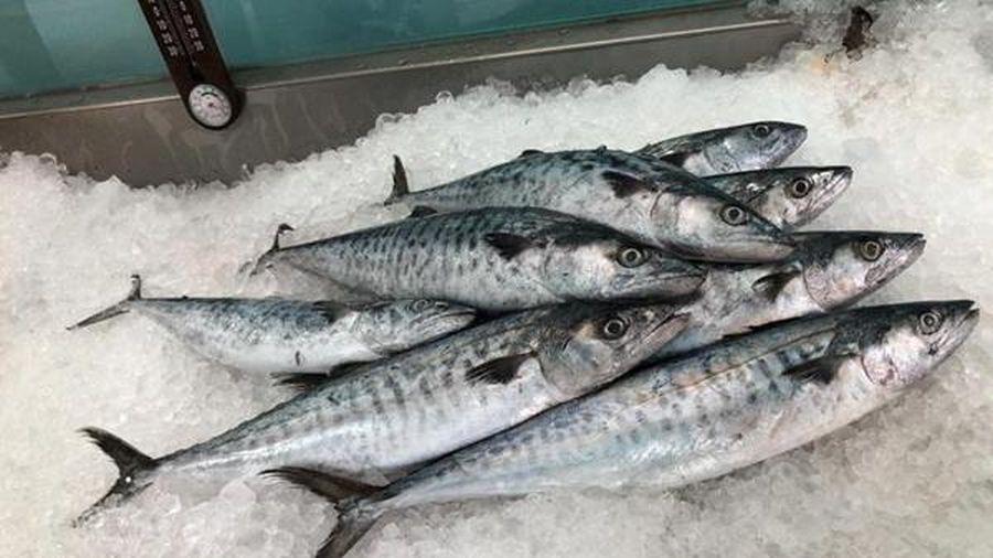 Phòng chống ngộ độc histamine trong cá biển
