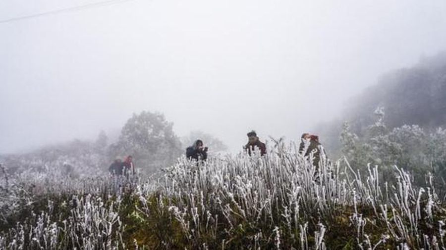 Sương muối và băng giá bao phủ vùng núi Bắc Bộ