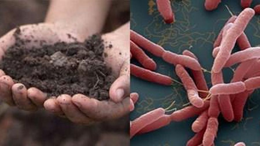 Tìm thấy vi khuẩn 'ăn thịt người' Whitmore tại gia đình có 3 trẻ tử vong ở Sóc Sơn