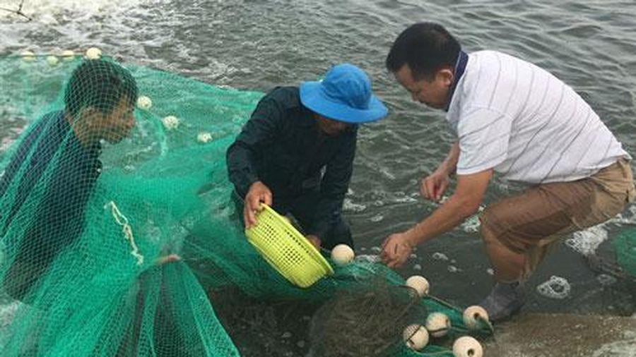Quảng Ninh: Xây dựng mô hình nuôi tôm sú bền vững