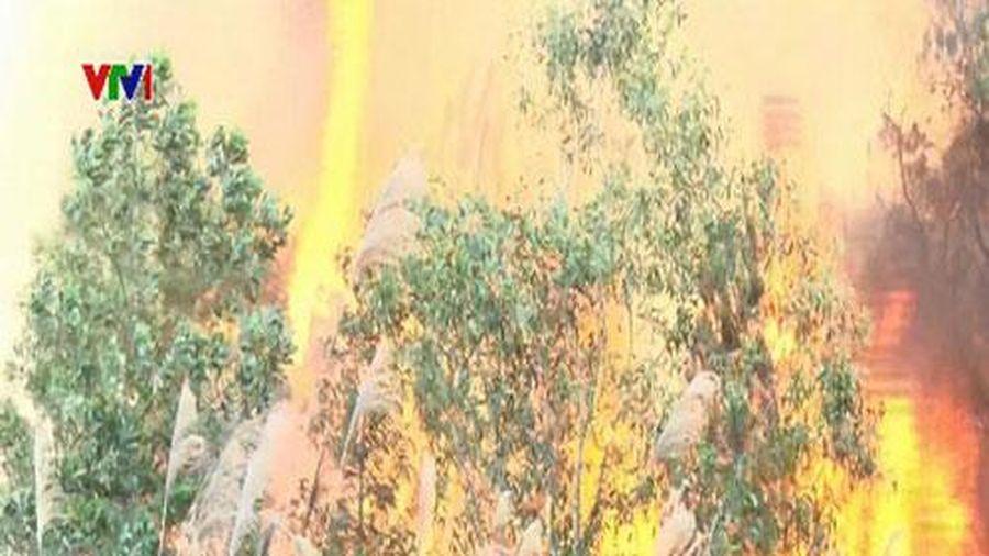 Khẩn trương khắc phục cháy rừng ở Bắc Giang
