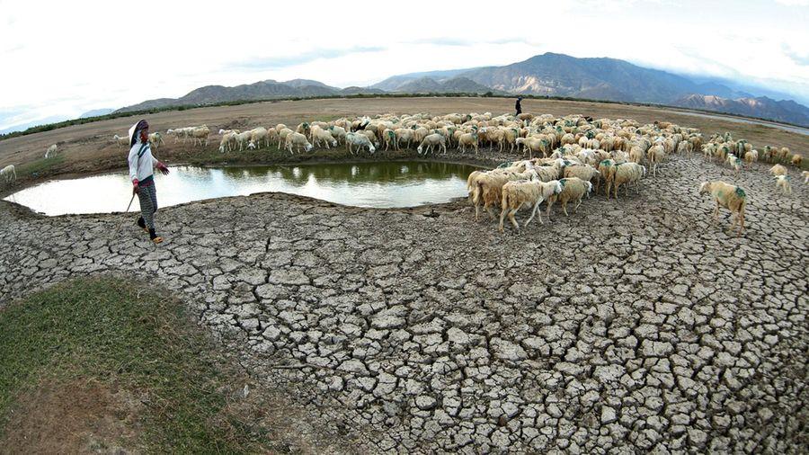 Dự án Nâng cao hiệu quả sử dụng nước tại 5 tỉnh bị hạn: Bắt đầu chọn nhà thầu tư vấn