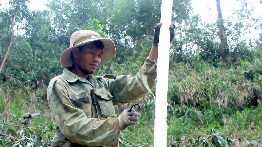 Đắk Lắk: Nhọc nhằn nghề 'phu keo' trên cao nguyên M'Đrắk