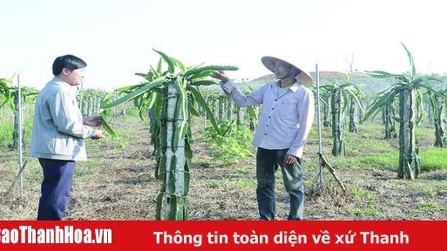Hiệu quả chuyển đổi cơ cấu cây trồng ở huyện Như Xuân