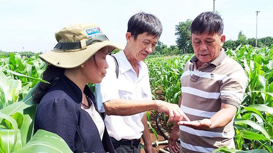 Nỗ lực phòng chống dịch bệnh trên cây trồng, vật nuôi