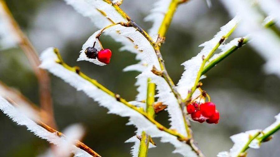 Tin thời tiết hôm nay (9/12): Bắc Bộ rét đậm dưới 4 độ C