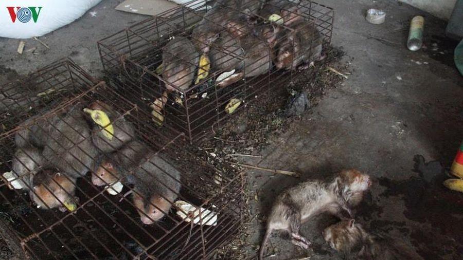 Hàng chục cá thể động vật hoang dã có nguy cơ bị chết