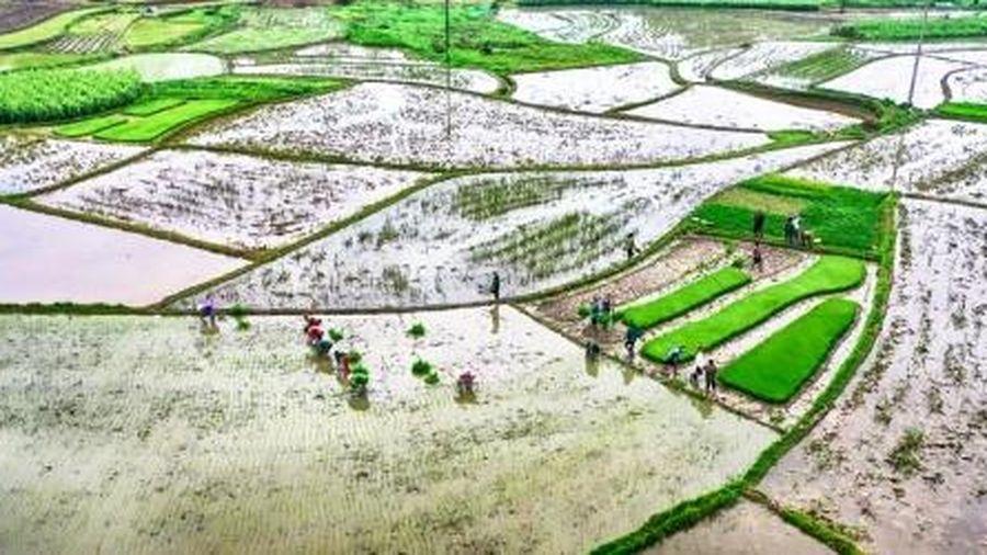 EVN cảnh báo: Cấp nước hồ thủy điện cho vụ Đông Xuân 2020 có nhiều khó khăn