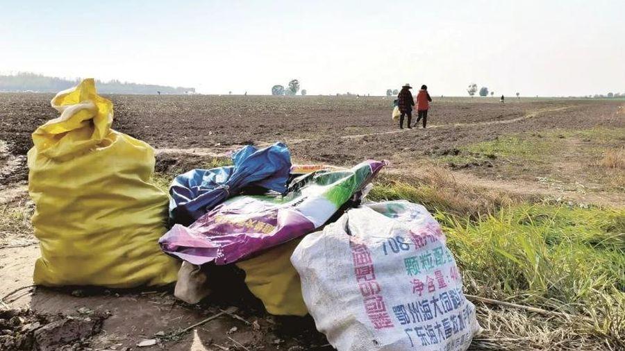 Cho hàng xóm xin vài ba củ cải, nông dân mất trắng vụ mùa gần tỷ đồng