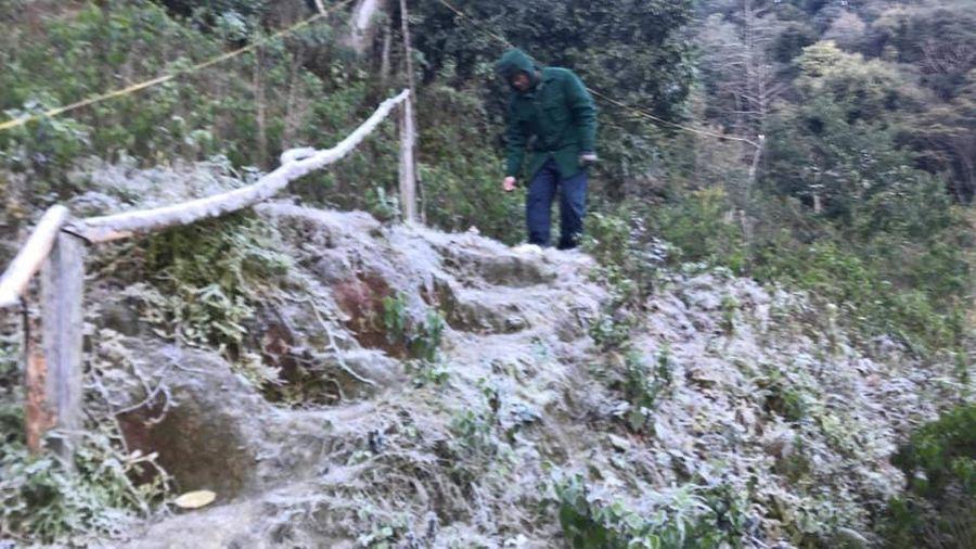 Huyện miền núi Nghệ An rét 0 độ C, băng giá phủ trắng cành cây, ngọn cỏ