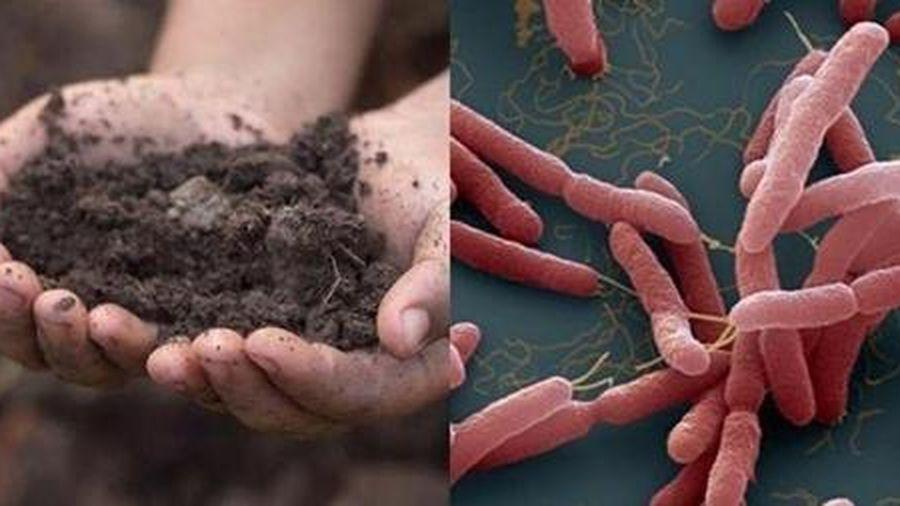 Vi khuẩn khiến 2 anh em ruột ở Hà Nội tử vong có trong đất