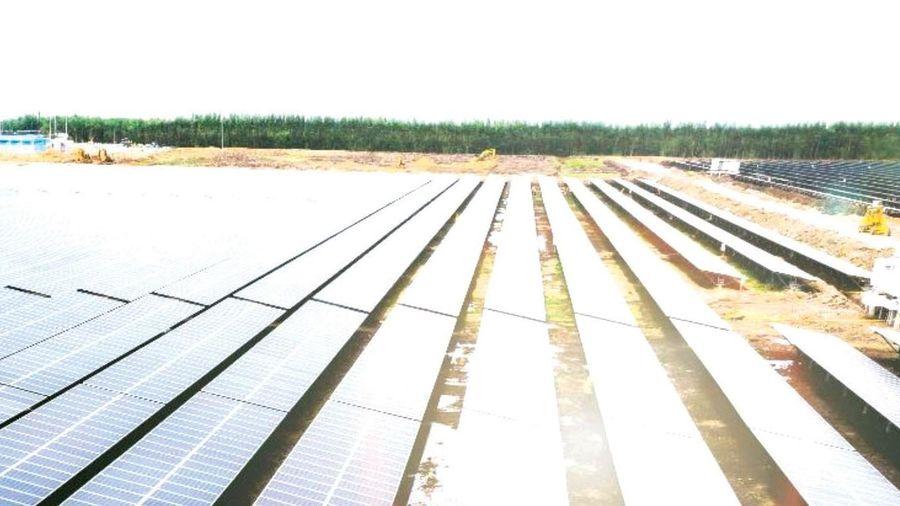 Bamboo Capital Group: Tạo nền tảng cho tương lai bền vững
