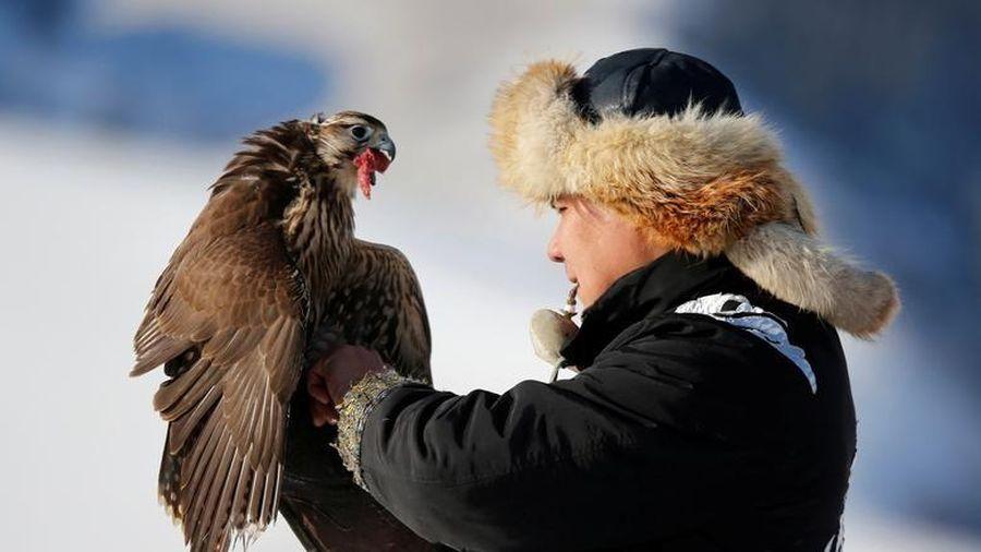 Đi săn cùng đại bàng vàng trên lưng ngựa ở Kazakhstan