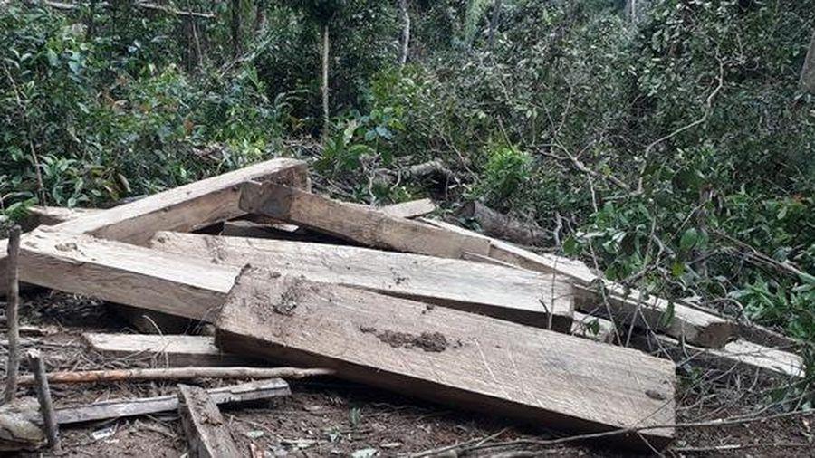 Phát hiện vụ phá rừng quy mô lớn ở Kon Tum