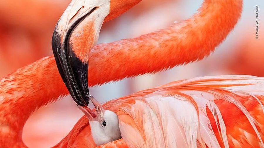 Ảnh đẹp 'ngẩn ngơ' ghi khoảnh khắc độc đáo trong TG động vật (2)