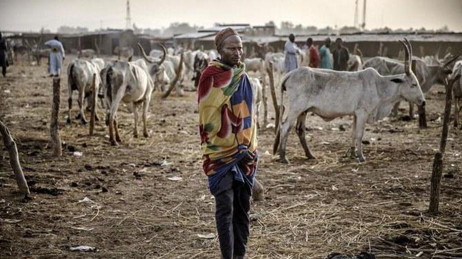 Boko Haram sát hại 19 người chăn nuôi gia súc ở Nigeria