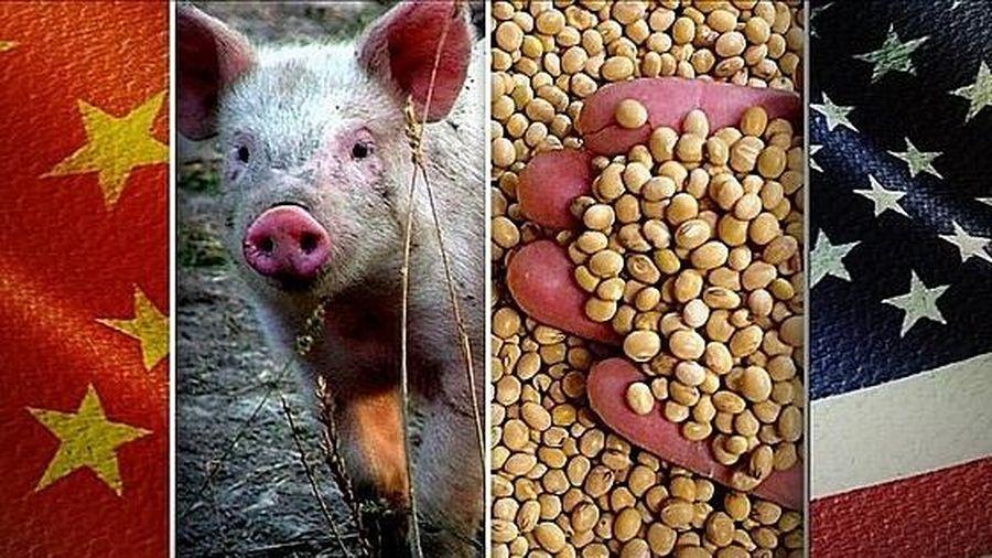 Triển vọng rộng mở cho ngành công nghiệp thịt lợn sau thỏa thuận thương mại giai đoạn 1