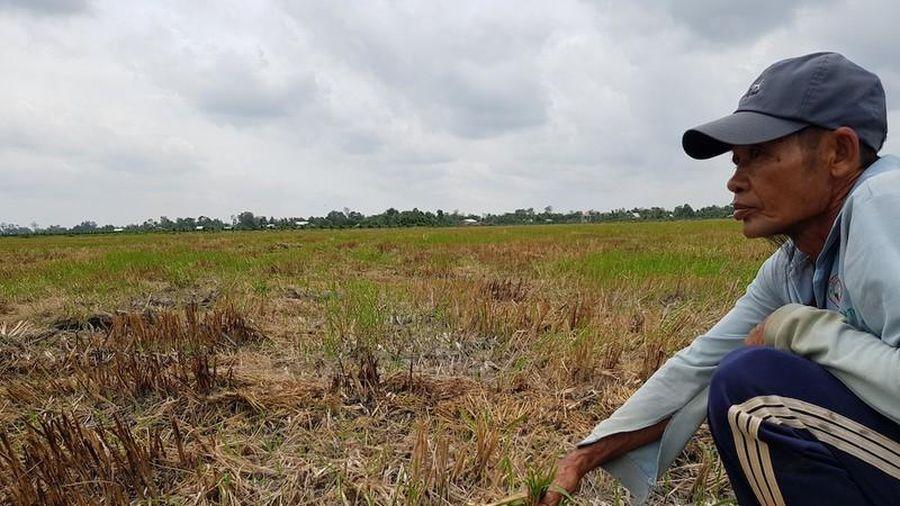 120 nghìn hộ dân miền Tây sẽ thiếu nước sinh hoạt vì mặn
