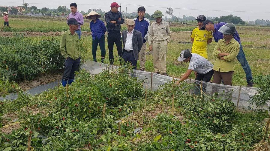Người nông dân chuyên tố cáo tiêu cực bị phá tan ruộng ớt