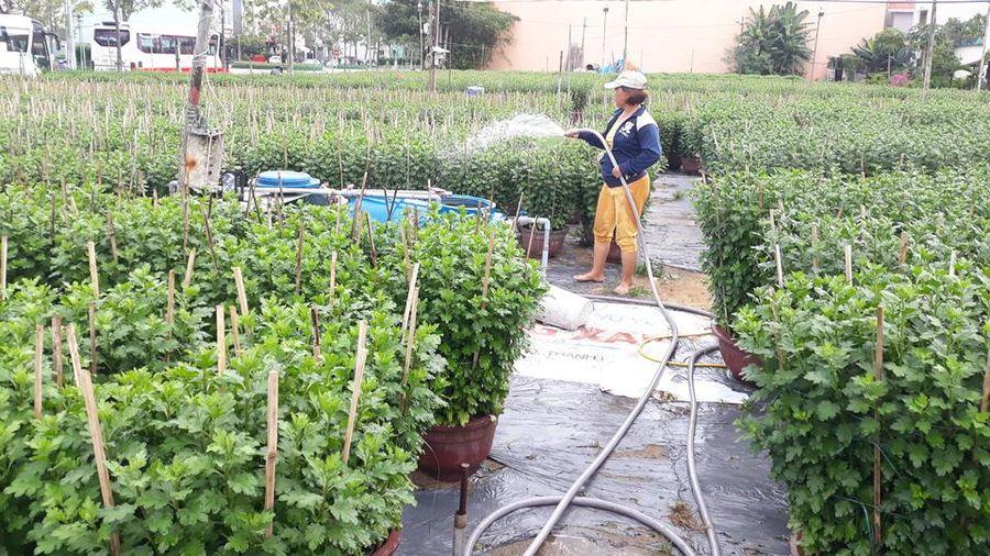 Thời tiết đang ủng hộ người trồng hoa