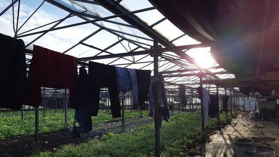 Giật mình nơi ở của lao động Việt trong vườn ươm cây ở Anh