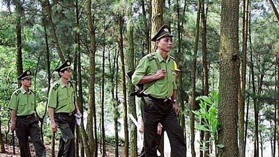 Hà Nội: Siết chặt quản lý bảo vệ rừng dịp Tết và lễ hội năm 2020
