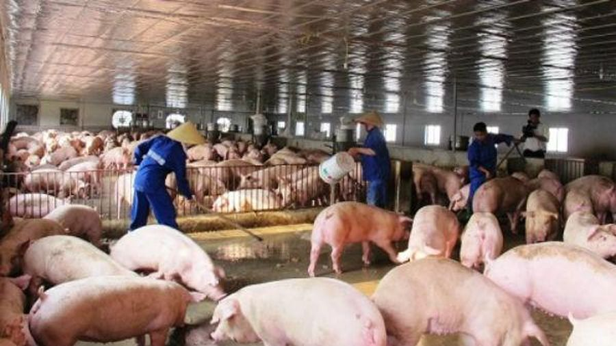 Hà Nội: Tái cấu trúc ngành chăn nuôi và thủy sản gặp khó