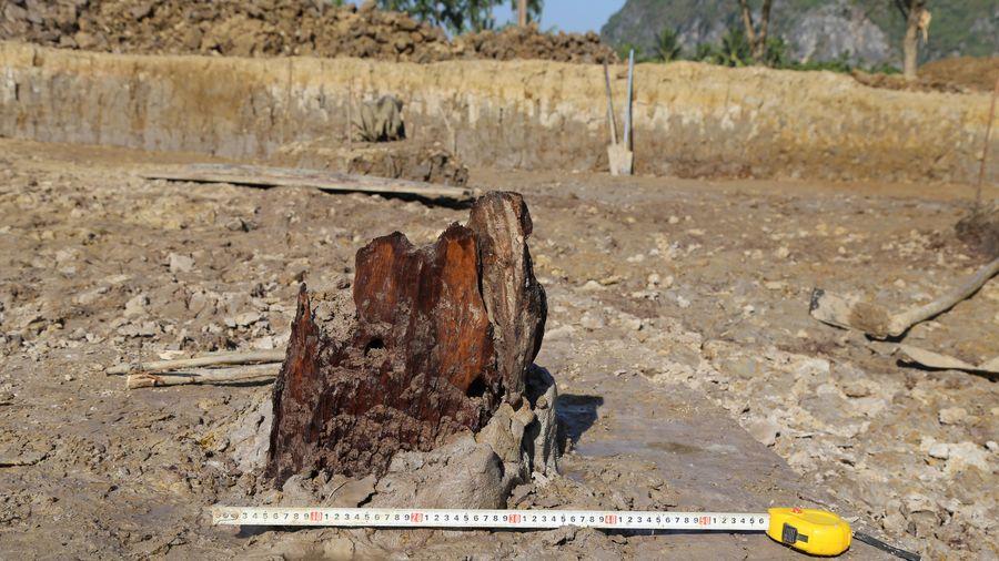 Hải Phòng: Khai quật 27 cọc gỗ trong trận chiến Bạch Đằng lần 3, năm 1288