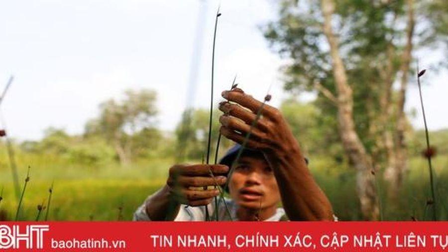 8X Việt lên báo nước ngoài nhờ sáng kiến làm giàu từ cỏ