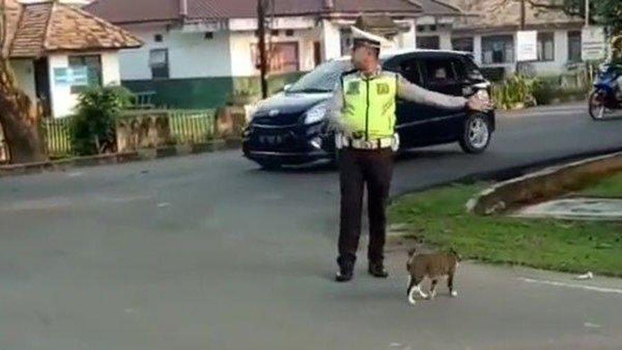 Giúp đỡ một chú mèo qua đường, chàng sĩ quan cảnh sát khiến cộng đồng mạng 'trầm trồ'