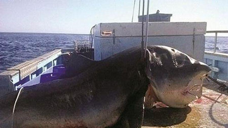 Kinh hãi khi bắt được thủy quái khổng lồ