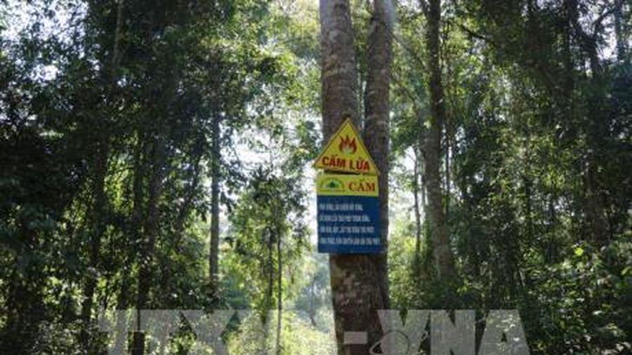 Bộ trưởng Nguyễn Xuân Cường: Nếu quản lý tốt, rừng chính là lợi thế của Việt Nam