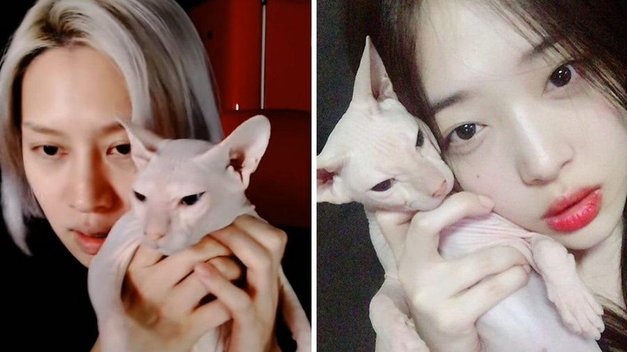 Thành viên Super Junior nhận nuôi mèo của Sulli