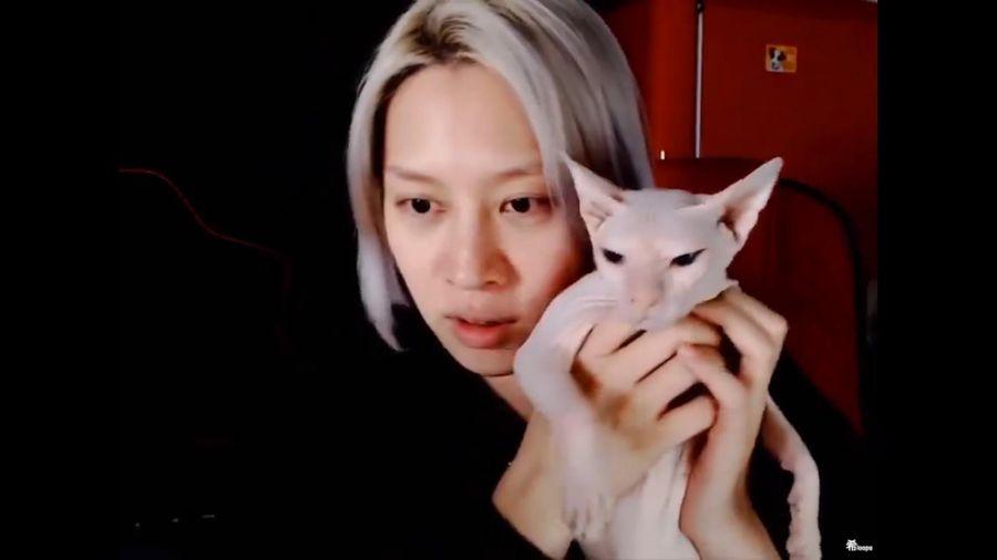 Heechul xác nhận đang nuôi mèo của Sulli