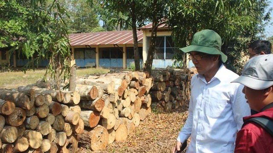 Thanh tra vụ phá rừng để trồng dược liệu ở khu bảo tồn