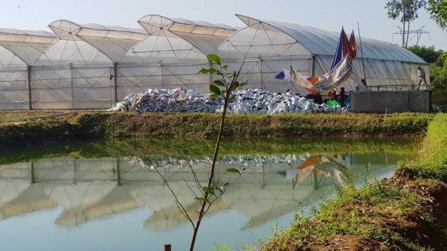 Thừa Thiên-Huế: Phát hiện dự án nông nghiệp công nghệ cao không phép trong nhà máy nước sạch